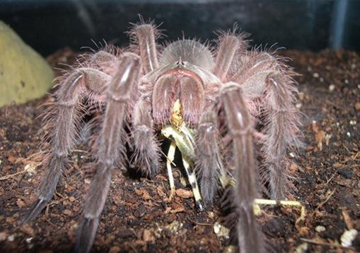 blondilocust1 copychidsweb_thumb